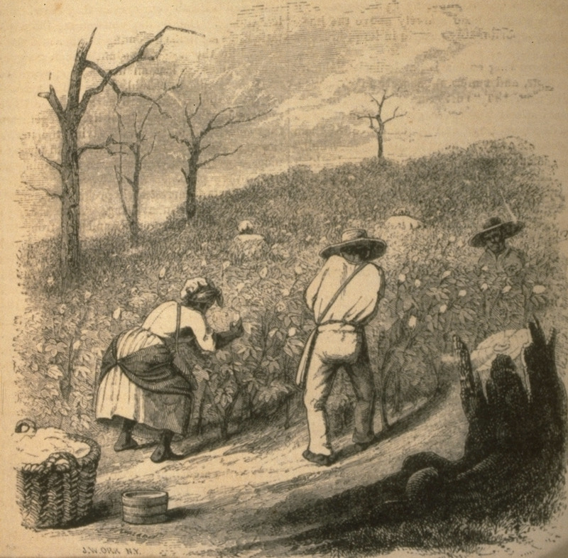 Men and women in the field. Illustrates article (pp. 447 ff.) cotton and its cultivation, by T.B. Thorpe of Louisiana.
