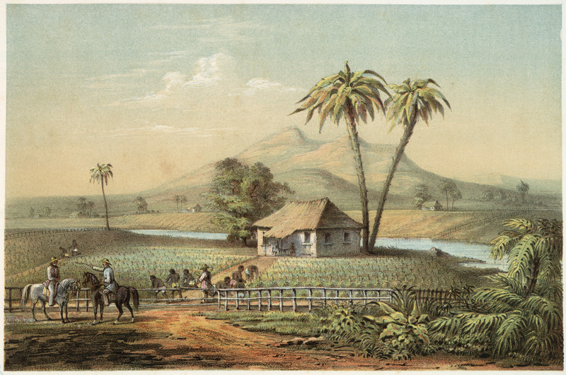 """""""View of a Tobacco Meadow"""" (caption translation). This lithograph shows a tobacco plantation with enslaved people working in the field, a horse-mounted overseer and a thatched roof on a rectangular house in the background. Frédéric Mialhe (1810-c. 1861), also Federico Mialhe, was a French landscape painter and draughtsman. He went to Cuba on by invitation of the Real Sociedad Patriótica. He designed three sets of lithographs from 1838 to 1854. The publisher, Bernardo May, claimed ownership of this image and sold them under his own name. For a discussion on the image see Emilio Cueto, Mialhe's Colonial Cuba (Miami: The Historical Association of Southern Florida, 1994)."""