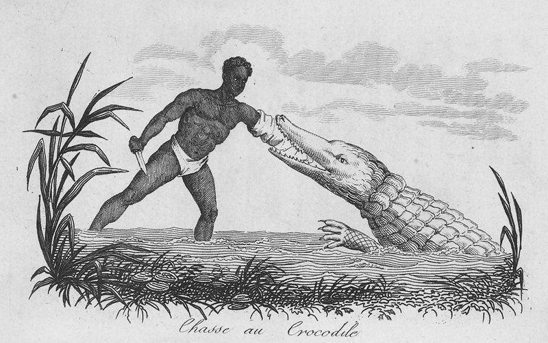 The crocodile, the author writes (pp. 82-83), is very common along the riverbanks. The hunter covers his right arm with several layers of strong cowhide and carries a dagger or Flemish knife in his hand. He approaches the animal holding out his arm, and the instant the crocodile