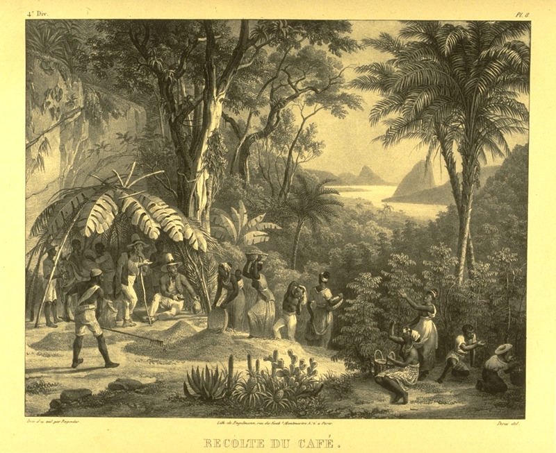 Slave men and women picking coffee, being supervised by whites. For an analysis of Rugendas' drawings, as these were informed by his anti-slavery views, see Robert W. Slenes, African Abrahams, Lucretias and Men of Sorrows: Allegory and Allusion in the Brazilian Anti-slavery Lithographs (1827-1835) of Johann Moritz Rugendas (Slavery & Abolition, vol. 23 [2002], pp. 147-168).
