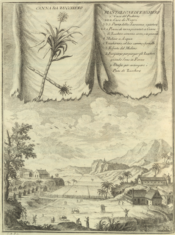 """""""Sugar Cane; Sugar Plantation"""" (caption translation). This illustration shows the layout of a sugar plantation. Slave houses were on the left, and above them the mansion/great house. A water mill was in lower right with a cane field in the center. This image does not appear in the London edition of the American Gazetteer and seems to have been included especially for the Italian publication. This is a reverse image from the original source for this illustration: Denis Diderot, Encyclopedie . . . (Paris, 1762), vol. 1, plate 1. See also image sucrerie_plate1."""