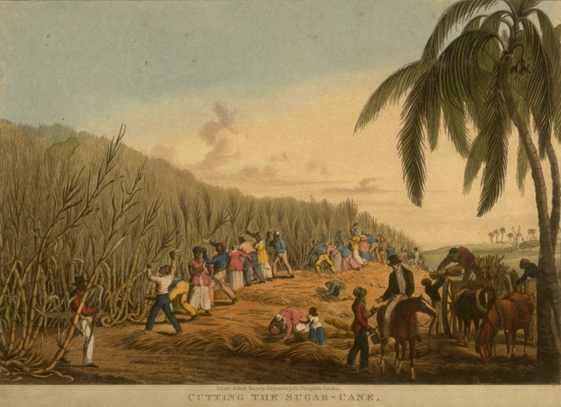 Caption: Cutting the Sugar Cane, on Delap's Estate, men and women in first gang, black driver supervising; white manager/overseer on horseback. Little is known of William Clark although he was probably a manager or overseer of plantations in Antigua. The ten prints in the collection (only 9 of which are shown on this website) are based on his drawings, converted into prints by professional printmakers. All of the prints are shown and extensively described in T. Barringer, G. Forrester, and B. Martinez-Ruiz, Art and Emancipation in Jamaica: Isaac Mendes Belisario and his Worlds (New Haven : Yale Center for British Art in association with Yale University Press, 2007), pp. 318-321; the descriptions in the Yale publication are based on Clark's unpaginated text and quotations from that text.