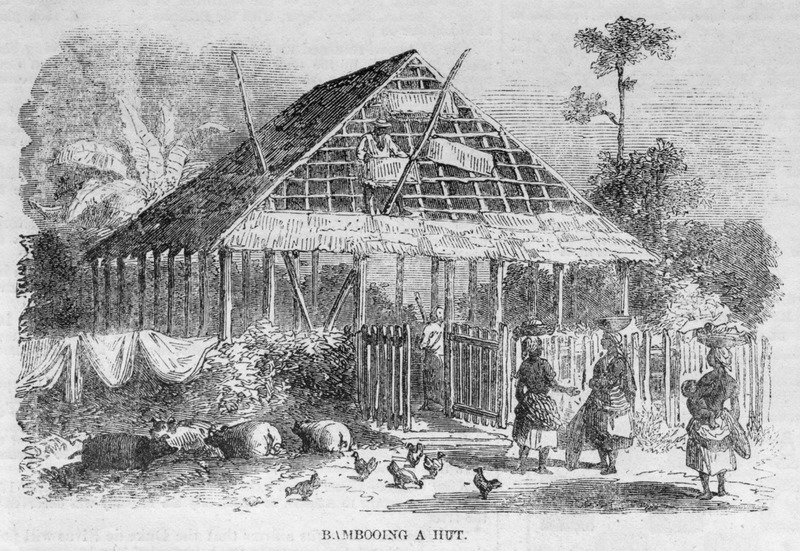 Caption, Bambooing a hut, near Freetown. Bambooing refers to thatching of the house, described in the article (p. 436).