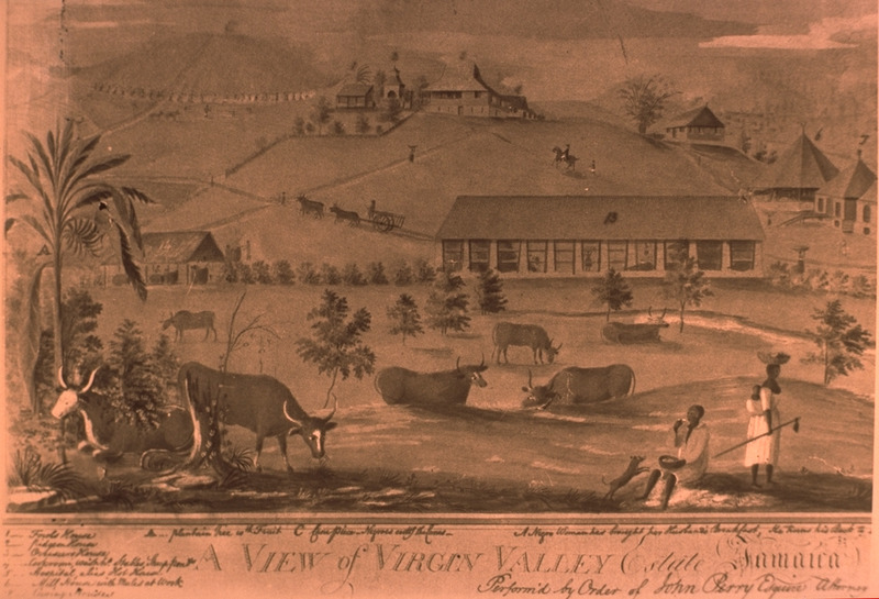 A partial view of the estate, showing various out buildings, e.g., overseer's house, hospital or hot house, mill, stables. In the right-hand corner, there are two figures; one, a woman with a long-handled hoe, basket on her head, and baby on her back (slide of image, courtesy of Barry W. Higman).