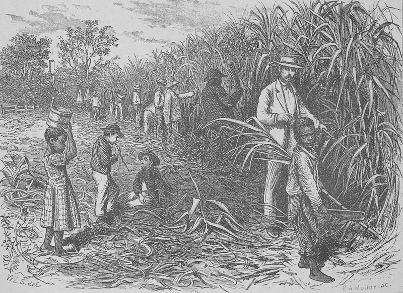 Shows the reaping of the sugar cane; black fieldworkers, white overseer. Original sketch made by J. Wells Chamney who accompanied the author during 1873 and the spring and summer of 1874; the latter describes this plantation on pp. 82-83. Although relating to the post-emancipation period, the scene evokes the later ante-bellum years.