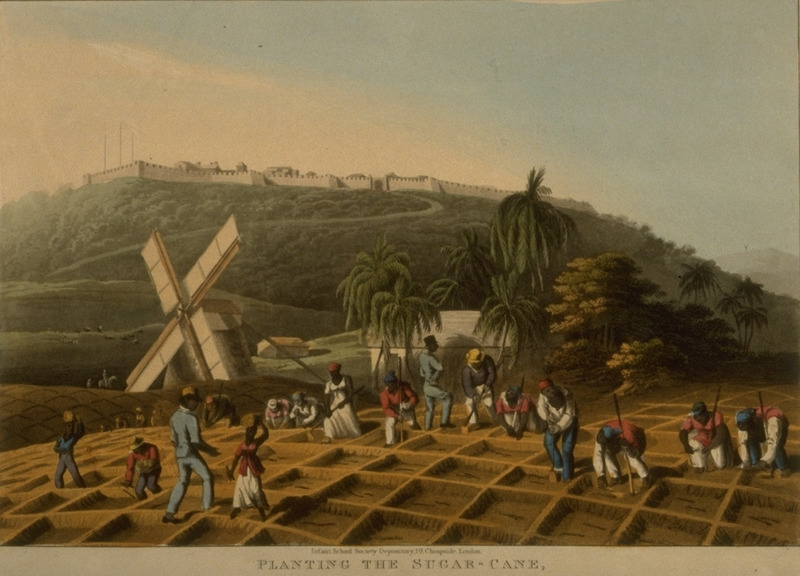 Caption, Planting the Sugar Cane, on Bodkins Estate, shows men and women of the first gang planting cane in cane holes, supervised by black overseers; windmill in background. Little is known of William Clark although he was probably a manager or overseer of plantations in Antigua. The ten prints in the collection (only 9 of which are shown on this website) are based on his drawings, converted into prints by professional print makers. All of the prints are shown and extensively described in T. Barringer, G. Forrester, and B. Martinez-Ruiz, Art and Emancipation in Jamaica: Isaac Mendes Belisario and his Worlds (New Haven : Yale Center for British Art in association with Yale University Press, 2007), pp. 318-321; the descriptions in the Yale publication are based on Clark's unpaginated text and quotations from that text.