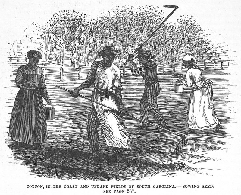 Although published after the Civil War, this scene could have been witnessed during the later antebellum period. The illustration accompanies a long descriptive article on cotton production, Cotton, in the Coast and Upland Fields of South Carolina, by Jennie Haskell (pp. 567-574).