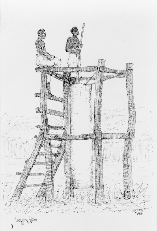 This sketch shows two men on a raised structure or scaffold filling a tall bag with cotton. William Berryman was an English artist who lived in Jamaica for eight years between 1808 and 1816. He produced about 300 pencil drawings and watercolour of people, landscape, settlements, and flora in the island's southern parishes and the general region surrounding Kingston. Several other Berryman works are reproduced in T. Barringer, G. Forrester, B. Martinez-Ruiz, et al., Art and Emancipation in Jamaica: Isaac Mendes Belisario and his Worlds (New Haven: Yale Center for British Art in association with Yale University Press, 2007).