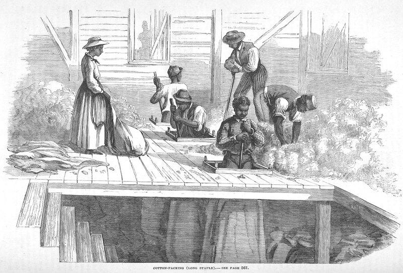 Caption, Cotton-Packing (Long Staple)