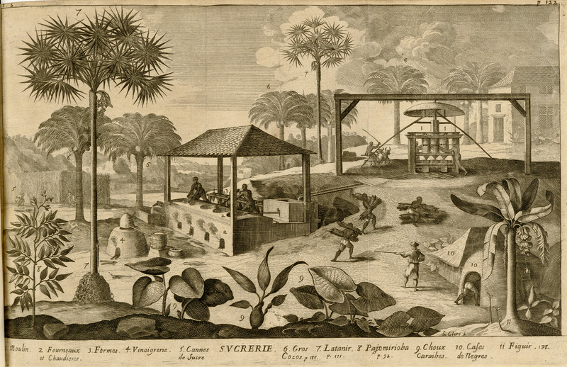 Although labeled, Sucrerie (sugar works), this image shows more than activities associated with sugar making. The numbers on the image are identified in the legend underneath. Central to the scene is the sugar works, including the ox-drawn mill with vertical rollers (1), the furnace and boilers in which the sugar juice (coming down the gutter from the mill) is boiled (2), and the formes, that is, the conical sugar pots, usually earthenware, in which the raw sugar was placed for for draining. Enslaved laborers are depicted carrying canes to the mill and feeding it in the rollers. Also shown are various trees (6 [the coconut], 7, 11), plants (5 [sugar cane],8, 9), where vinegar is made (4), the huts of the enslaved (10).