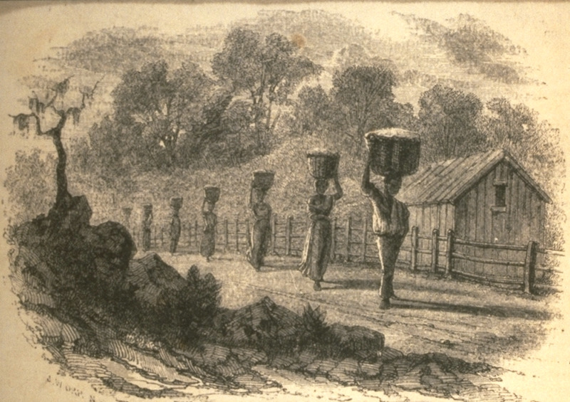 With slave cabins in the background, shows men and women carrying baskets of picked cotton to the gin. Illustrates an article (pp. 447 ff.) cotton and its cultivation, by T.B. Thorpe of Louisiana.