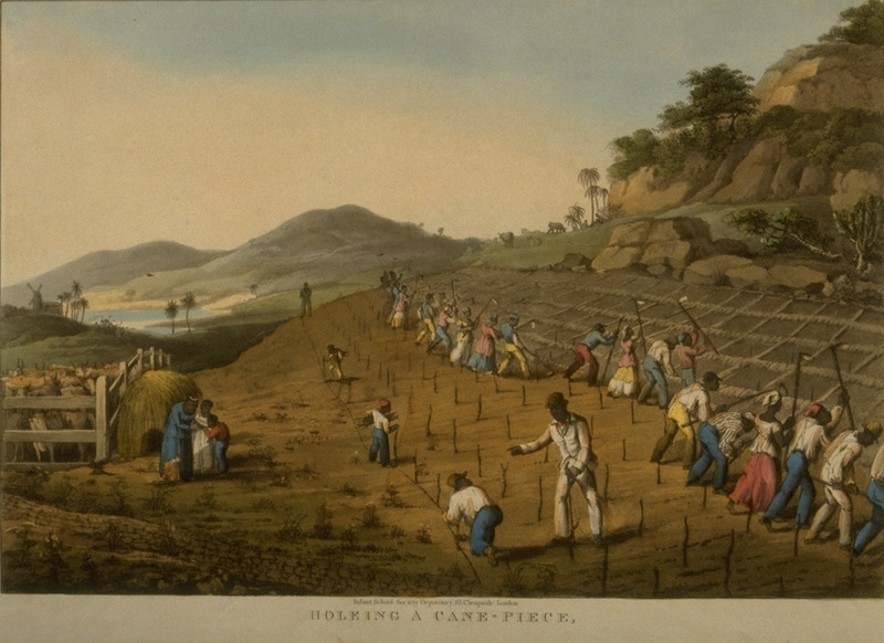 Caption, Holeing a Cane-Piece, on Weatherell's Estate. Shows first gang of enslaved men and women using long-handled hoes to dig cane holes; others are marking the field for where the holes will be placed. A black driver is supervising the work. Little is known of William Clark although he was probably a manager or overseer of plantations in Antigua. The ten prints in the collection (only 9 of which are shown on this website) are based on his drawings, converted into prints by professional printmakers. All of the prints are shown and extensively described in T. Barringer, G. Forrester, and B. Martinez-Ruiz, Art and Emancipation in Jamaica: Isaac Mendes Belisario and his Worlds (New Haven : Yale Center for British Art in association with Yale University Press, 2007), pp. 318-321; the descriptions in the Yale publication are based on Clark's unpaginated text