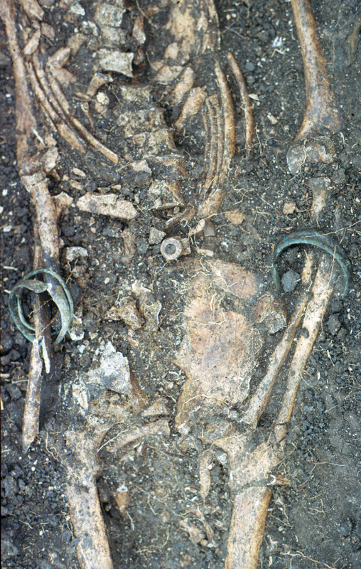 This photograph shows a buried skeleton extended on its back in situ with copper bracelets on each arm and a pipe bowl on the pelvic area. Handler suspects this individual was possibly an Obeah medicine man and likely from the Voltaic region. For full view of skeleton see image Newton001. For more detail on the items found on this person see images Newton002-Newton007.